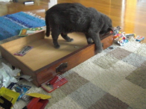 Kisse städar i lådan.